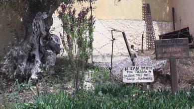 Το γερμανικό καταφύγιο και η ελιά που έσωσε τον Πλατανιά της Κρήτης