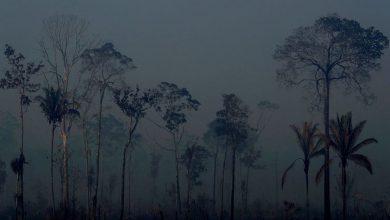 Οι 7 από τις χώρες του Αμαζονίου υπέγραψαν σύμφωνο για την προστασία του τροπικού δάσους